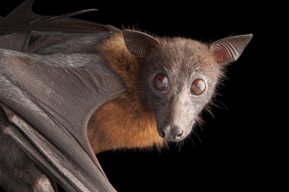 الخفاش ليس أعمى